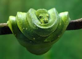 snake_chinese_year