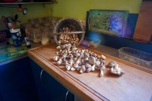 mushroom_pate1