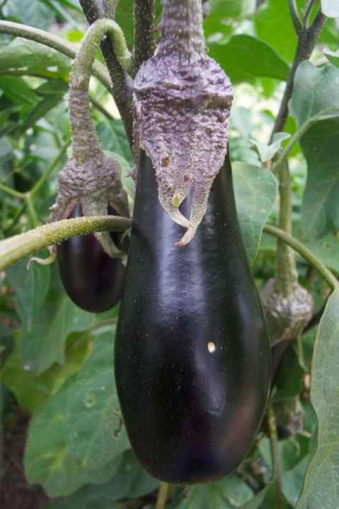 aubergine_chickpea_curry_under_the_lime_tree_2